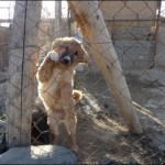 One of the many Nowzad rescues